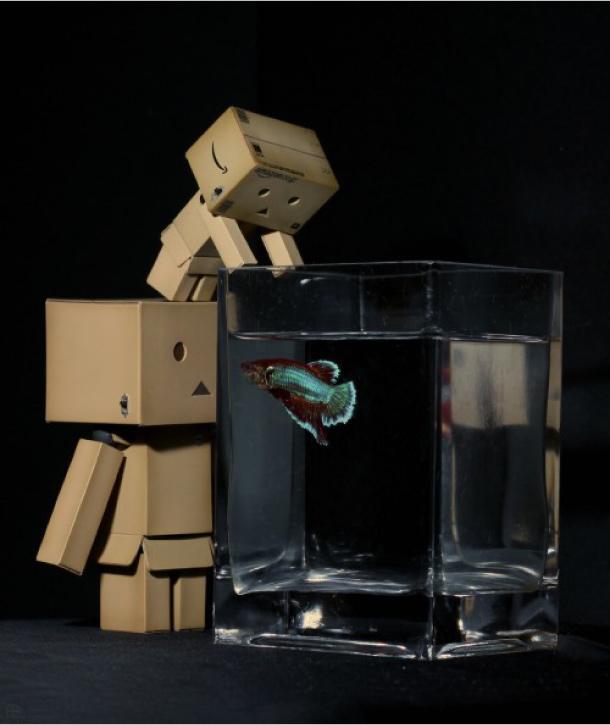 Blog Paper Toy papertoy Danbo fish Danbo, le robot en carton...